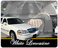White limos graphic